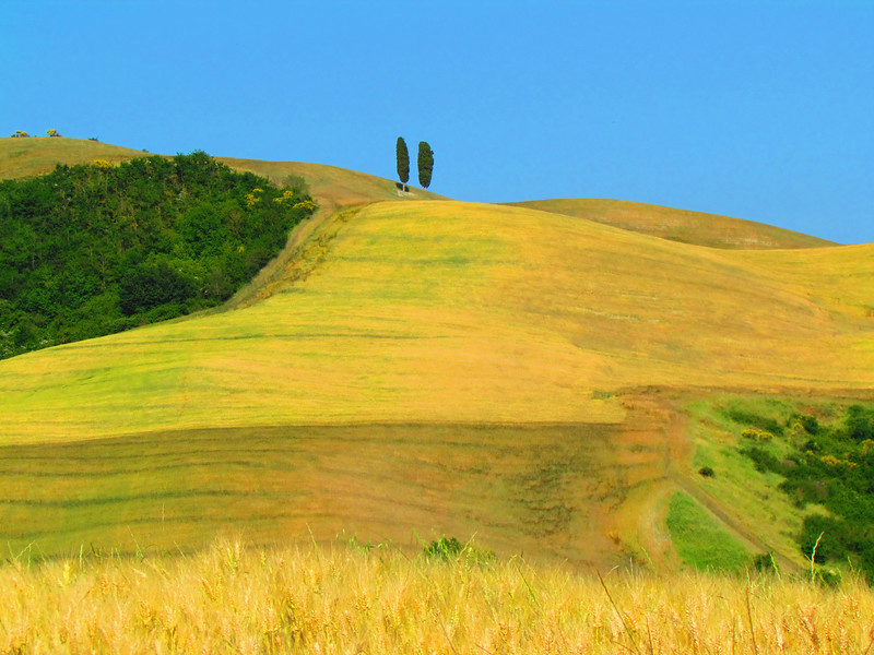 Golden Hill and Cypress Trees, Tuscany, Italy