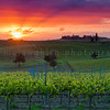 Sunset Over a Vineyard, near Montalcino, Tuscany