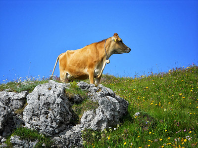 Kemmerer__The Majestic Beast of the Wild on our hike in the Dolomites