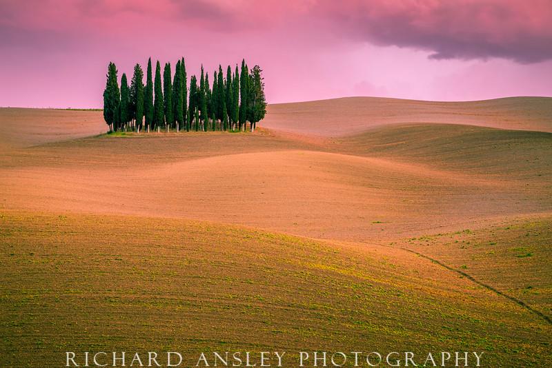 Tuscany Cypress Grove