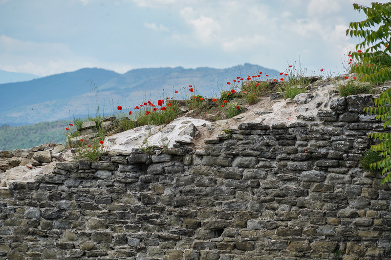 Poppies on Ancient Wall