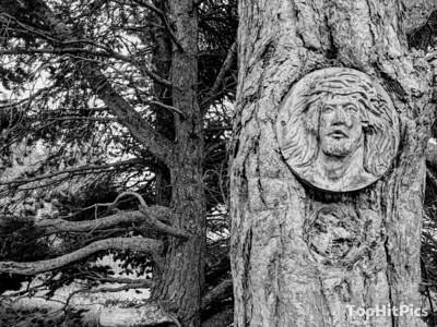 A Wooden Carving of Jesus Christ on a Tree in Vetan, Aosta Valley, Italy