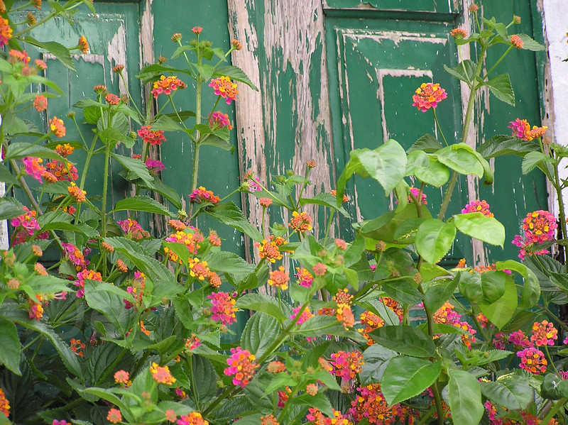 Flowers and peeling green door, Obidos, Portugal