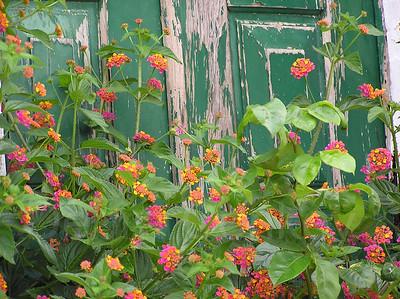 Flowers and peeling green door, Obidos, Portugal