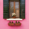 Green Shutters on Pink Wall, Burano, Veneto
