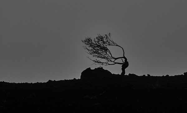 tree on Etna