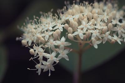flowers-5689