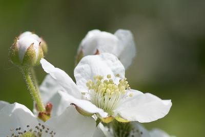 flowers-2574