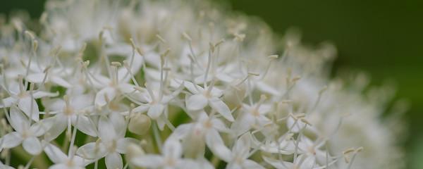 flowers-5662