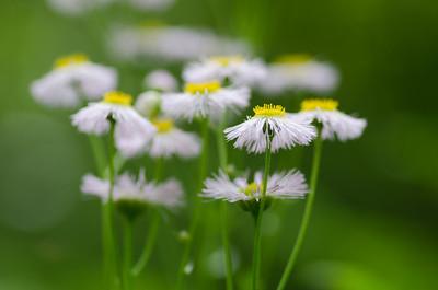 flowers-5654