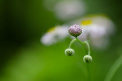 flowers-5648