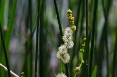 flowers-5745
