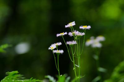 flowers-5652