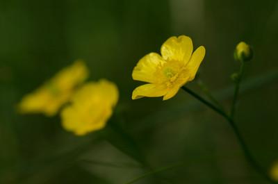 flowers-5879