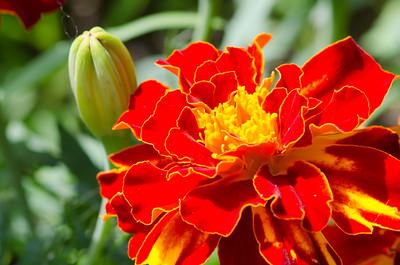 flowers-5610