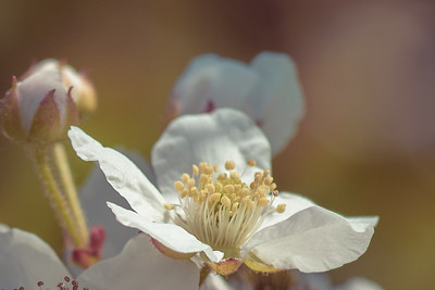 flowers-2578