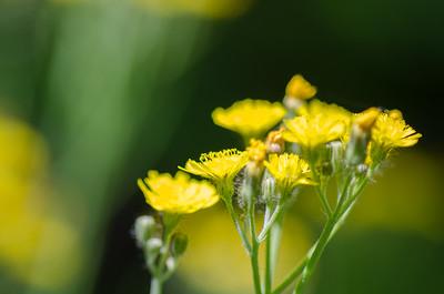 flowers-5632