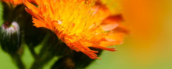 flowers-5569