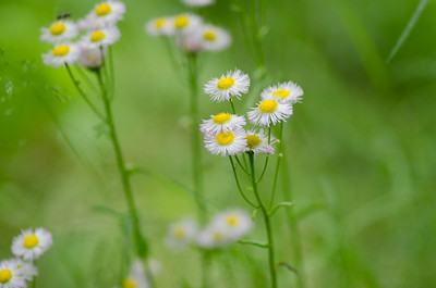 flowers-5649