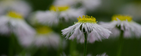 flowers-5641