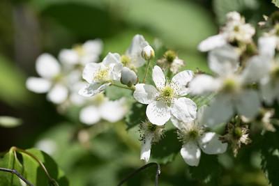flowers-2579