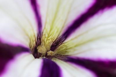 flower-2023