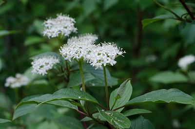 flower-5264