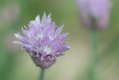 flower-2121