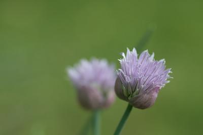 flower-2115
