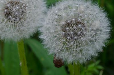 flower-5319