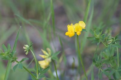 flower-2094