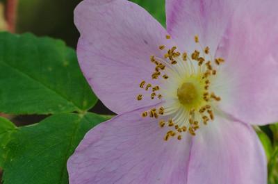 flower-5252