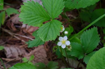 flower-5305