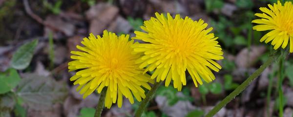 flower-5313