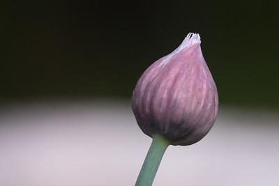 flower-2124