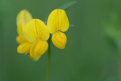 flower-2087