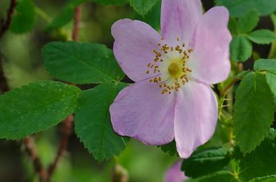 flower-5253