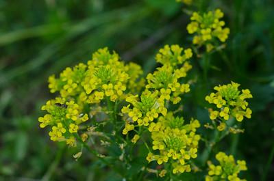 flower-5423