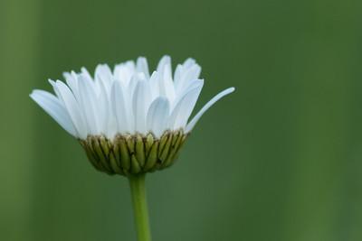 flower-2092