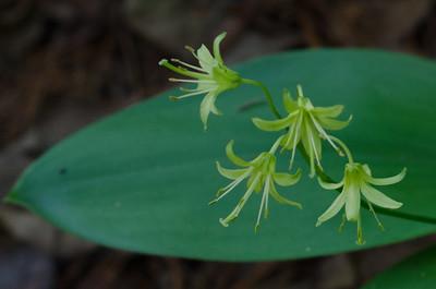 flower-5295
