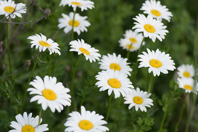 flower-2073