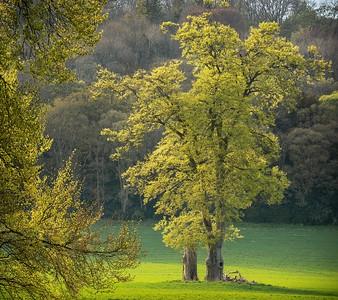 Avington Park