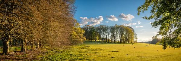 Hinton Ampner Park