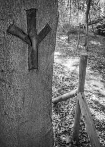 Colden Common Wood