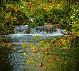 River Itchen near Otterbourne