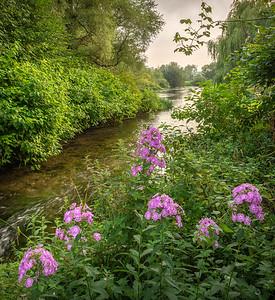 River Itchen - Martyr Worthy