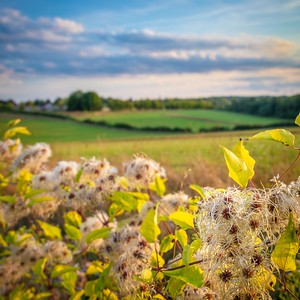 Barton Meadows nature reserve, Winchester