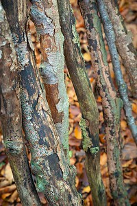 Detail from woodland shelter - Upper Barn Copse