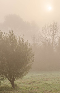 Water meadows near Highbridge
