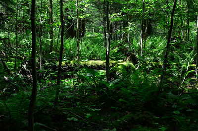 Woodland swamp